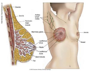 breast-cancer-illustrations